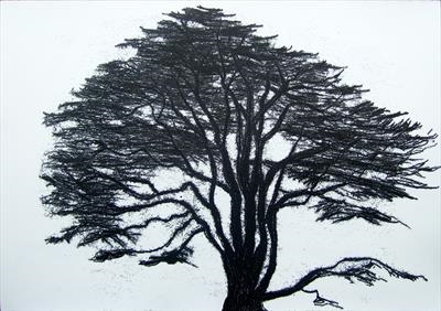 cedar of lebanon 2