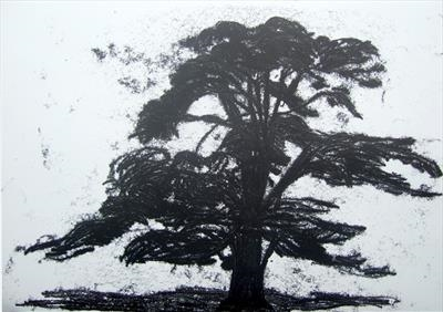 Cedar of Lebanon 4