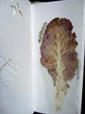 Kale and Caterpillar by Susan Deakin, Artist Book