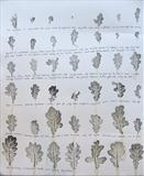 Leaf Study 1 by Susan Deakin, Artist Print, leaf print with hand written text