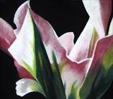 Pink and White Tulip by Susan Deakin, Drawing, Pastel on Paper