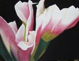 Tulip by Susan Deakin, Drawing, Pastel on Paper