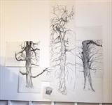 chestnut trees: work in progress by Susan Deakin, Drawing, Charcoal on Paper