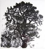 oak portrait 1 by Susan Deakin, Artist Print, Monotype