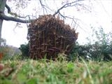 the leaf mould container grows larger and fuller by Susan Deakin, Installation, chestnut leaves